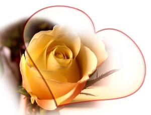rose-66310_640